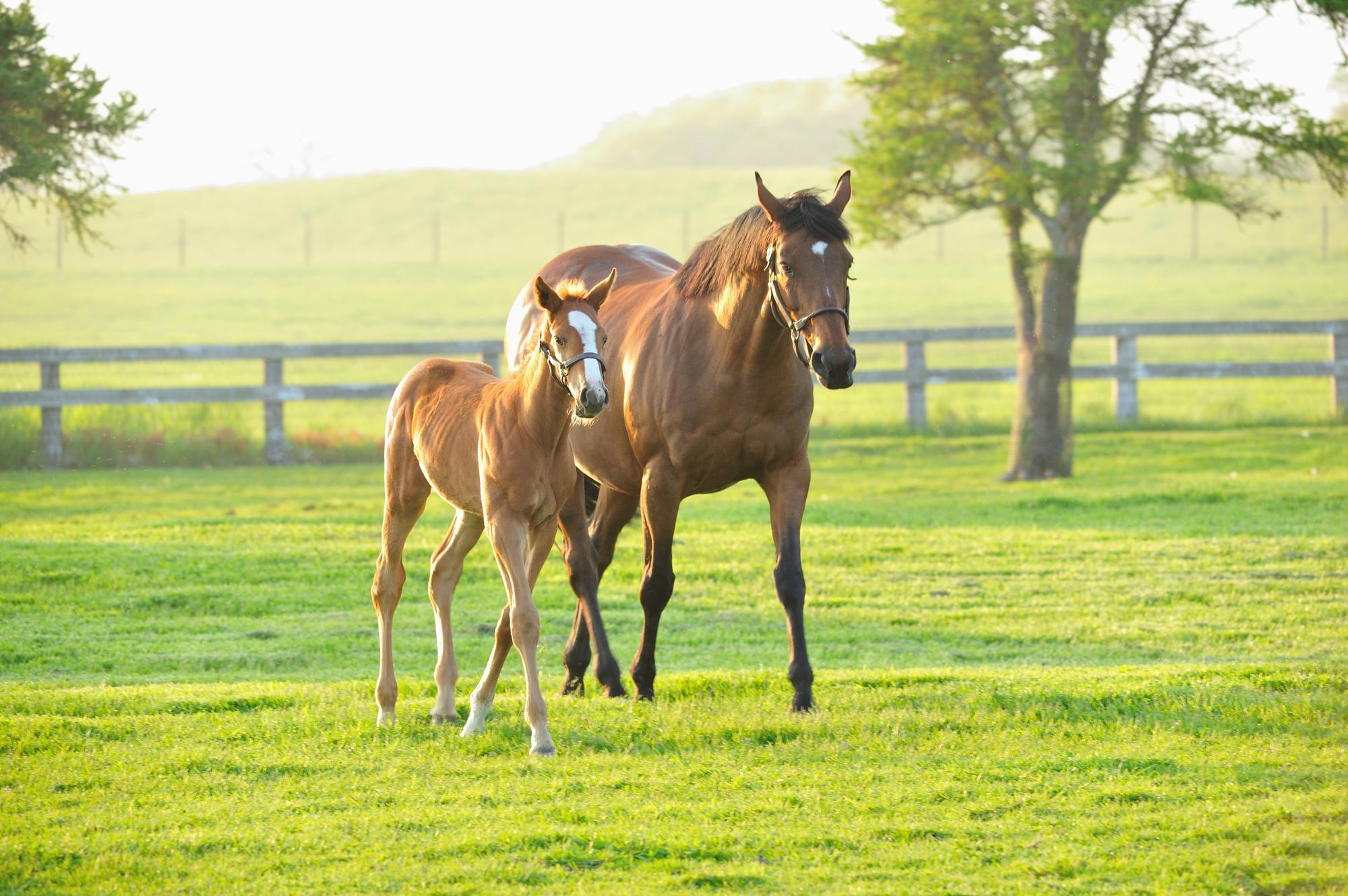 草原を歩く馬のイメージ